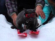 Cat Skiing